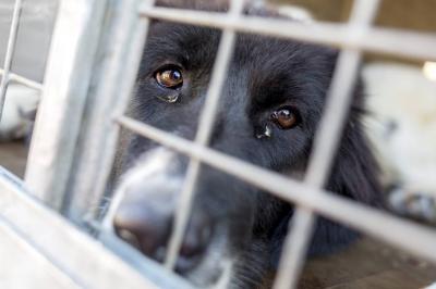 Abandono y descuido: Principales causas de maltrato animal en Bucaramanga