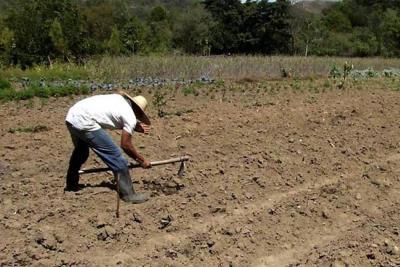 Corte constitucional avaló Reforma Rural contemplada en los acuerdos de paz
