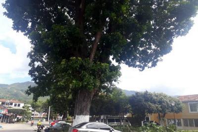 Árboles preocupan a vecinos de Portal Campestre en Girón