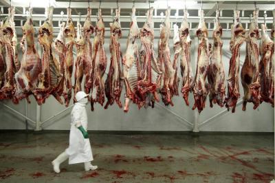 El sacrificio clandestino de  bovinos le gana espacio al legal en Santander