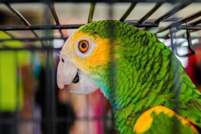 Animales silvestres y exóticos que no son mascotas en Santander