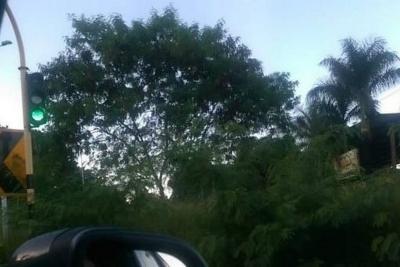 Denuncian poca visibilidad en la autopista Floridablanca-Piedecuesta por maleza