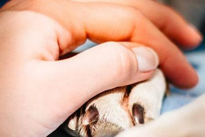 Investigan si perro murió por ataque con ácido en Piedecuesta