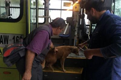 Pasajera, la perrita que se perdió en un bus de Metrolínea en Bucaramanga