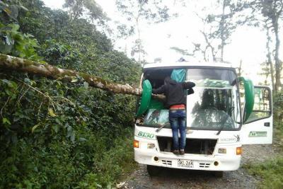 Árbol terminó incrustado en un autobús en Santander
