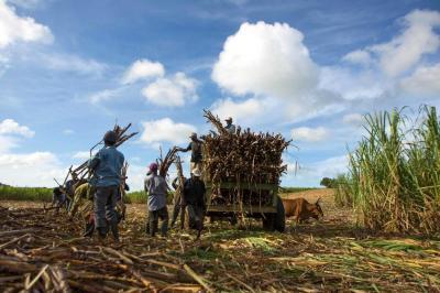 Los proyectos agrícolas que se aseguran en Colombia son: caña de azúcar (34,2%), Banano (22,8%), forestales (19,4%), arroz (10,1%), maíz (6,7%), tabaco (2,5%) y soya (1,3%).