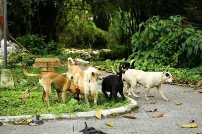 Van 588 agresiones por animales potencialmente transmisores de rabia en Bucaramanga