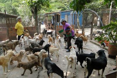 Este domingo se recolectarán alimentos para cerca de 20 refugios animales en Bucaramanga