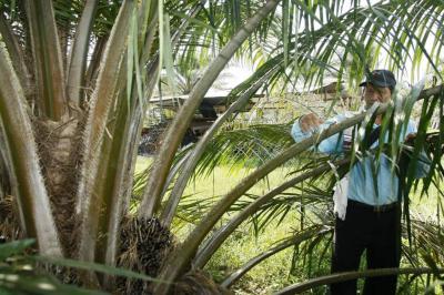 Palma sostenible, negocio del futuro