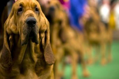 Este sábado llega una nueva edición de Bucaramanga Dog Show
