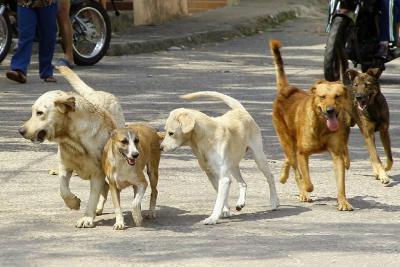 No habrá Coso pero planean un Centro de Bienestar Animal