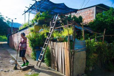 La mujer que convirtió su casa en jardín para transformar un barrio del Norte de Bucaramanga