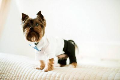 Descubra los peligros de humanizar a su mascota