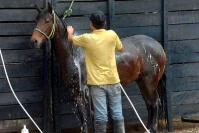 La feria ganadera de Bucaramanga inicia con caballos