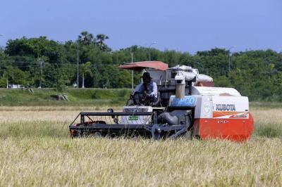 Se daría triangulación de arroz en la importación desde Perú
