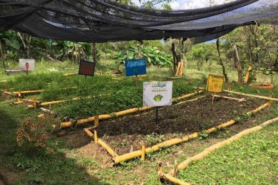 En el Siglo XXI cultivan hortalizas y aromáticas sin sustancias químicas