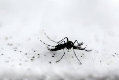 Santander, sexto departamento en reporte de casos de dengue