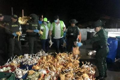 Cdmb y Policía sellaron planta de sacrificio en  la vereda Guatiguará de Piedecuesta