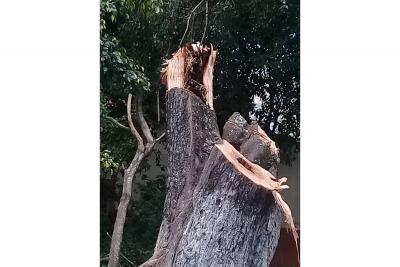 La caída de un árbol genera preocupación