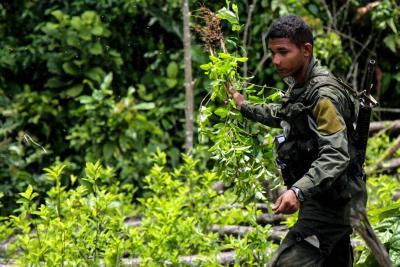 Alertan crecimiento de cultivos de coca en 171 mil hectáreas