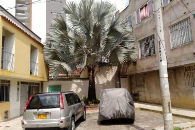 Barrio de Floridablanca anunció batalla jurídica  para proteger una palma gris