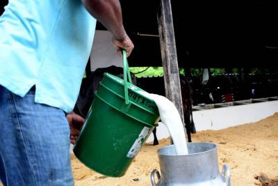 Sector con buena producción, pero malos precios para el lechero