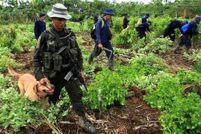 Venezuela pide a Colombia actuar por cultivos ilícitos