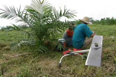 Producción de aceite de palma caería 12% en 2018