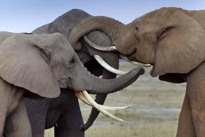 Un elefante mató a pisotones a una turista alemana en Zimbabue