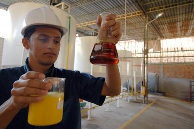 300 mil toneladas de aceite de palma entrarían de Ecuador