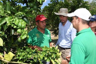 Investigadores crean proyecto para salvar los cultivos de lima tahití de Santander