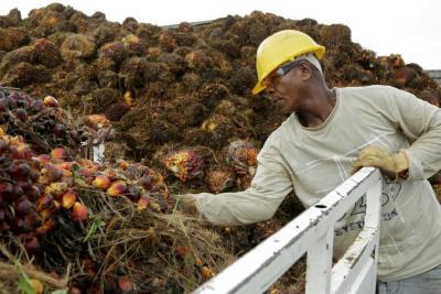 En dos años, 50% de la palma tendrá certificación de sostenibilidad