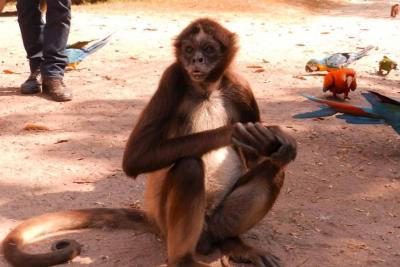 Conozca las entidades que protegen la fauna de Santander