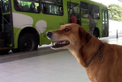 Perrita 'Pasajera' será ícono contra el abandono de animales en Bucaramanga
