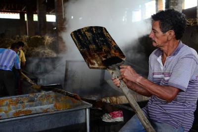 En San Benito y Güepsa, aproximadamente, el 80% de la economía gravita alrededor de la actividad panelera.
