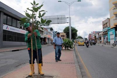 Tercer Carril: en seis zonas de Bucaramanga se compensarán los árboles talados