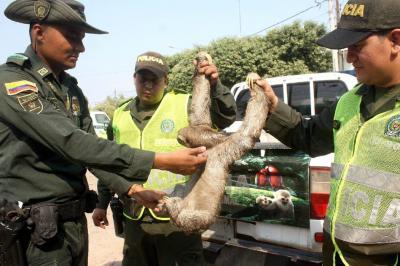 Fauna silvestre: rescatados 2.010 animales en Santander