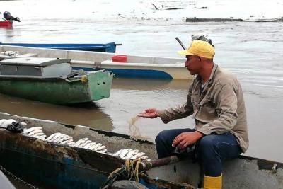 Dramático descenso en la pesca en el río Magdalena