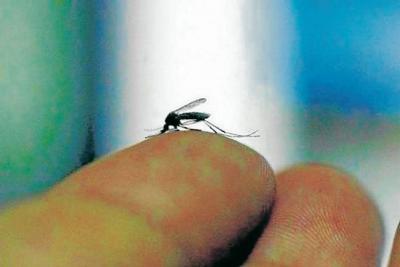 La mujer en  los tiempos  del Zika