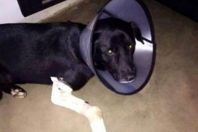 Envían a la cárcel a un joven acusado de dispararle a un perro en Floridablanca