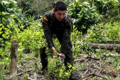 Nariño, con el 27%, y Norte de Santander, con el 26%, son los departamentos con mayor cantidad de hectáreas de cultivos ilícitos en Colombia, según reportes de la Fiscalía.