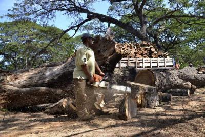 Perú clave en cambio climático si frena la fuerte deforestación