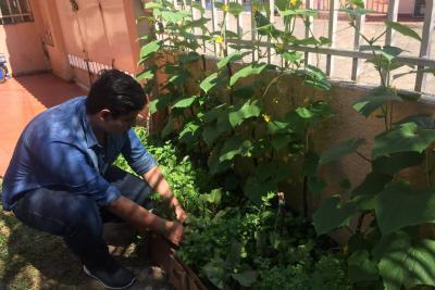 Huertas caseras se convirtieron en símbolo de la reconciliación