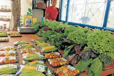 La agricultura: una forma de combatir la guerra desde Santander
