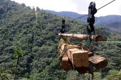 Según el Ideam, la deforestación aumentó en Guaviare, Meta y Norte de Santander