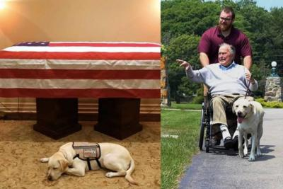 Conmovedora foto del perro del ex presidente George H.W. Bush resguardando su ataúd