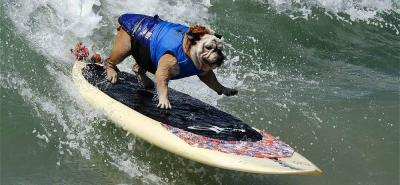 Vea las espectaculares fotos de perros surfistas