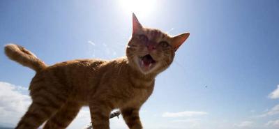 Fukuoka, la isla de los gatos