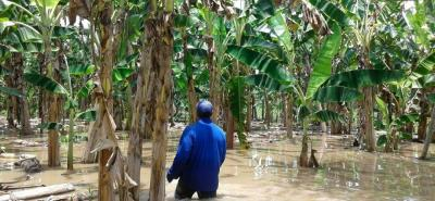 Desbordamiento del río Magdalena inundó cultivos de una vereda en Puerto Wilches