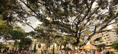 Inaugurado en 1925 el parque Santander se construyó para homenajear al hombre de Las Leyes Francisco de Paula Santander. En la actualidad es uno de los parques más representativos del centro de Bucaramanga.